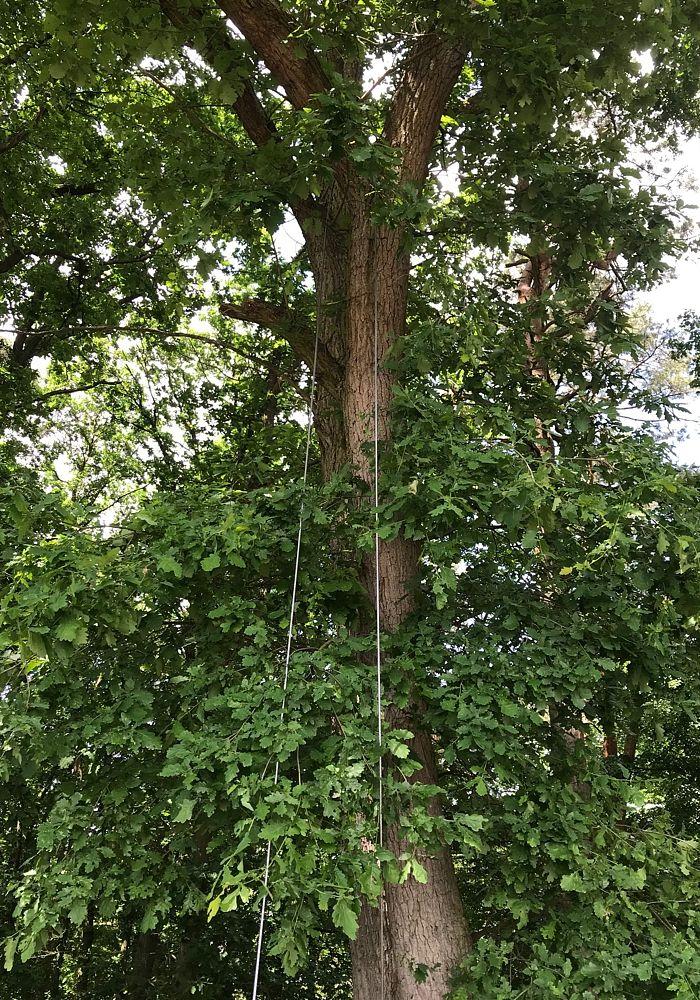 Komplettpaket Tree Cut Fallhilfeseil Baumzugseil Ftf 8 5t